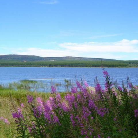 Le lac de charpal non loin du gîte lozere Javols